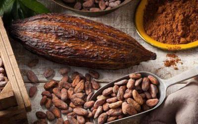 Chocolate de comercio justo: hacia una producción sostenible de cacao